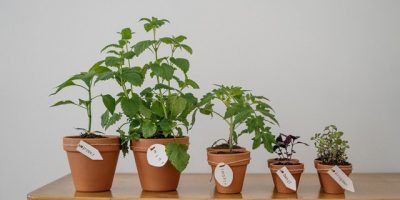 Your Guide to Storing Fake Plants
